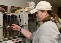 Animal_shelter_in_ND_FEMA Photo Gallery Open Source Doc