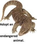 adopt a komodo dragon from World Animal Foundation